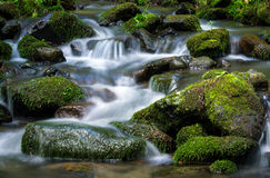 Mountain stream. Surrounded by green forest, Slovakia Stock Images