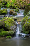 Mountain stream. Surrounded by green forest, Slovakia Royalty Free Stock Photo