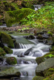 Mountain stream. Surrounded by green forest, Slovakia Royalty Free Stock Photography