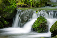 Mountain stream. Surrounded by green forest, Slovakia Stock Photo