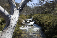 Mountain Stream, Thredbo. The Cascades Stream near Thredbo Village, Snowy Mountains, New South Wales Royalty Free Stock Images