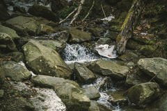 Mountain stream to the Carpathian mountains. The snowmelt in spring. The wildlife of Eastern Europe, Ukraine Royalty Free Stock Image