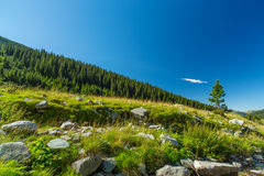 Mountain stream in the Transylvanian Alps Royalty Free Stock Photo