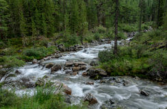Mountain stream through the trees Stock Photo