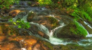 Mountain stream among trees Royalty Free Stock Images