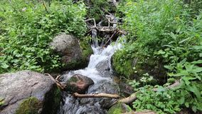 Mountain Stream Tumbling Through Rocks and Plants stock video