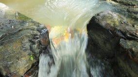 Mountain stream stock video