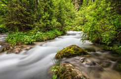 Mountain stream in Val di Fassa Royalty Free Stock Image
