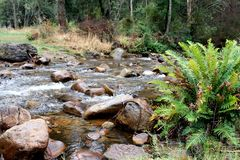 Mountain Stream Victoria Australia 1 Royalty Free Stock Images