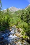 Mountain stream. Flows along a beautiful Roztoka Valley among mountains and woods. On picture you can see Roztoka stream and Kozi Wierch peak stock photos