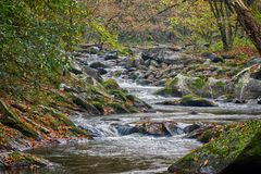 Mountain stream with mossy rocks. Mountain stream with water flowing over mossy rocks and colorful fall foliage falling from the trees Stock Image
