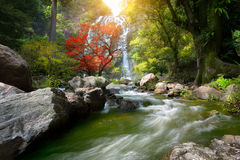 Mountain stream. And Waterfall in the autumn Stock Photography