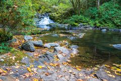 Mountain Stream Waterfall Autumn Landscape with Big Yellow Maple. Beautiful Autumn Landscape of Mountain Stream Waterfall along Sweet Creek Hiking Trail, Siuslaw stock photography