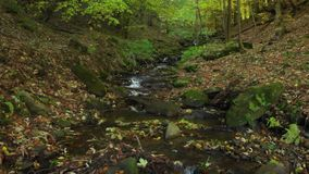 Mountain stream waterfall. Carpathian mountains. Crystal mountain stream. Carpathian mountains. Ukraine. Clear water flows in a mountain stream in the fall stock video footage