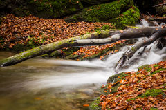 Mountain stream with waterfalls Stock Images