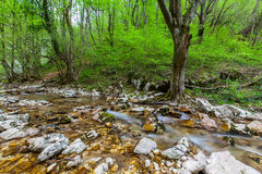 Mountain stream and waterfalls in the forest in spring Stock Photography