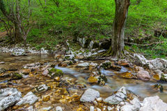 Mountain stream and waterfalls in the forest in spring Royalty Free Stock Photography