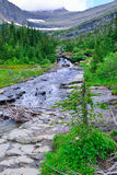 Mountain stream and wild alpine flowers on a high alpine trail in glacier national park Royalty Free Stock Photography
