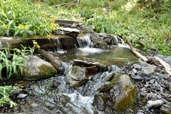 Mountain stream with wild sunflowers growing next to it. In Challis National forest, Idaho royalty free stock photo