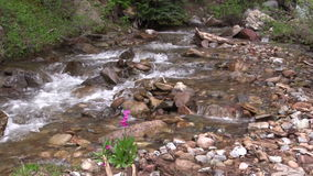 Mountain Stream With Wildflower stock footage