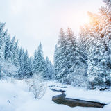 Mountain stream in winter Royalty Free Stock Photography