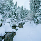 Mountain stream in winter Stock Images
