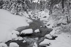 Mountain stream  in winter forest Royalty Free Stock Image