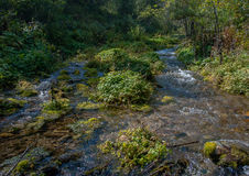 Mountain stream in a wood Stock Images