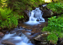 Mountain stream in the woods Royalty Free Stock Image
