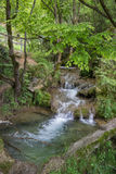 Mountain stream in the woods with clear cold water Stock Images