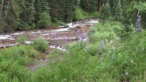 Mountain Stream Zoom In. A zoom in on a scenic mountain stream near aspen colorado stock footage