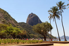 Mountain Sugarloaf square palm tree red beach, Rio de Janeiro Royalty Free Stock Photography