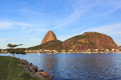 Mountain Sugarloaf tree Guanabara bay, Rio de Janeiro Stock Photography