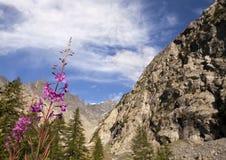 Mountain Summer Stock Photos