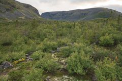 Mountain summer landscape of polar region. Stock Photos