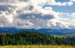 Trees near valley in mountains under sky with clouds. Mountain summer landscape. trees near meadow and forest on hillside under  sky with clouds Stock Photos