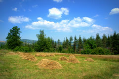Summer meadow piles of hay Royalty Free Stock Images