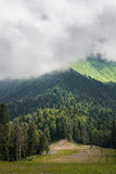 Mountain summer panoramic view with cloud and fir trees. Krasnay Royalty Free Stock Photo