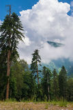 Mountain summer panoramic view with cloud and fir trees. Royalty Free Stock Photography