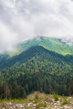 Mountain summer panoramic view with cloud and fir trees. Royalty Free Stock Image