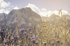 Mountain summer scene with flowers. Durmitor mountain landscape with flower and sun stock photo