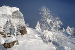 Mountain summit with a small fir tree. In winter at Urals, Russia Stock Photography