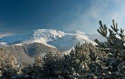 Mountain summit view through tree winter landscape. Mountain summit with snow through tree winter landscape seasonal concept Royalty Free Stock Photo