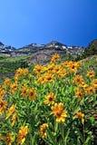 Flowers Under Storm Mountain. Mountain sunflowers grow below a mountain peak Stock Photography