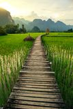 Sunset and green rice fields in Vang Vieng, Laos Royalty Free Stock Image