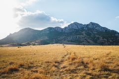 A path through dried grass leads to the mountains royalty free stock images