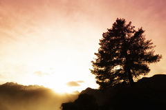 Mountain sunset with tree silhouette Stock Image