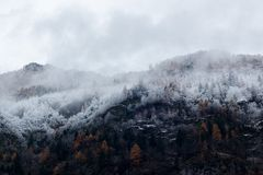 Mountain Surrounded by Trees With Snows Royalty Free Stock Photos