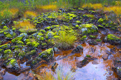 Mountain swamp in Inari. Stock Image