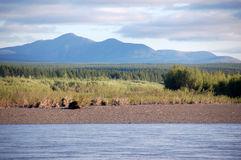 Mountain and taiga at Kolyma river Russia outback Royalty Free Stock Photos